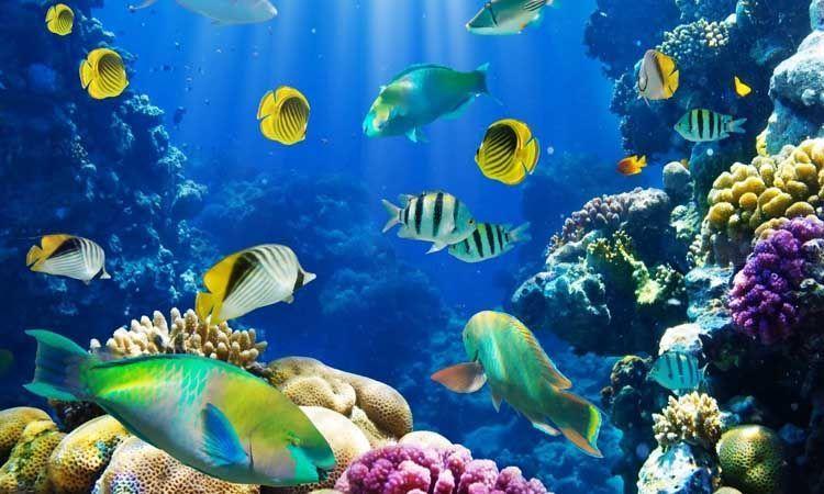 Productos náuticos biodegradables contra la contaminación en el mar